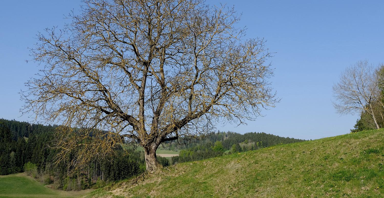 Träd Landskap
