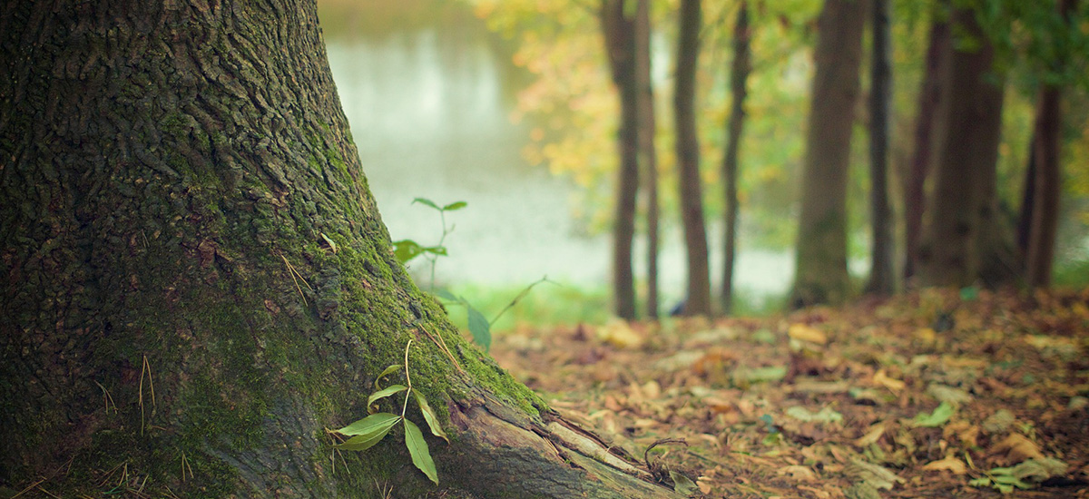 träd och vatten
